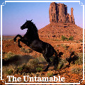 ✪ untamable ✪